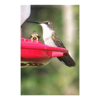 Ruby Throated Hummingbird Stationery