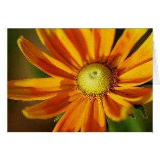 Rudbeckia Bloom Card