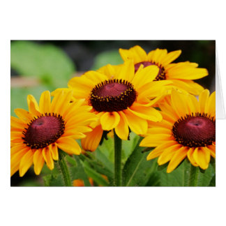 Rudbeckia Blooms Card