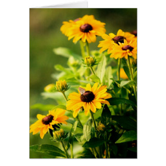 Rudbeckia Card