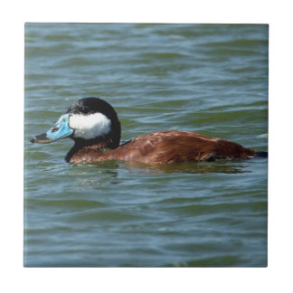 Ruddy Duck Tile