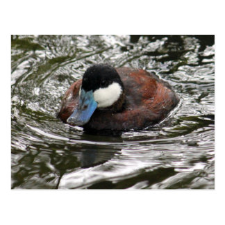 Ruddy Duck TY Postcard