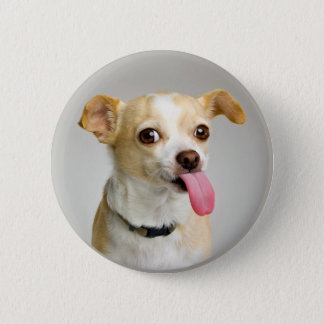 Rude Chihuahua Button