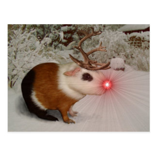 Rudolf the rednosed guinea pig postcard