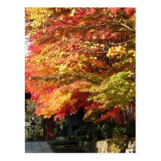 Rue rayée par chute, Nikko, Japon Cartes Postales