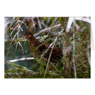 Ruffed Grouse 02 Card