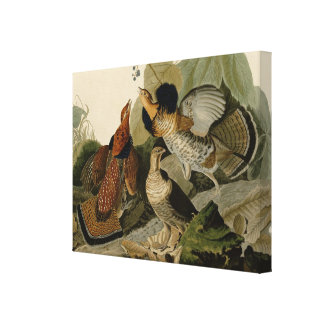 Ruffed Grouse by John Audubon Canvas Print