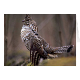 Ruffed Grouse Card