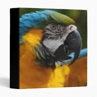 Ruffled Blue and Gold Macaw Binders