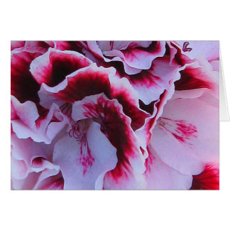 Ruffled Pelargonium Greeting Card