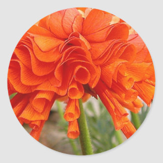 Ruffled Ranunculus Round Sticker