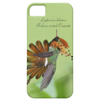 Rufous-crested Coquette iPhone 5 Cases
