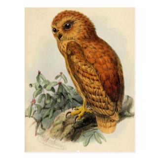 Rufous Fishing Owl Vintage Illustration Postcard