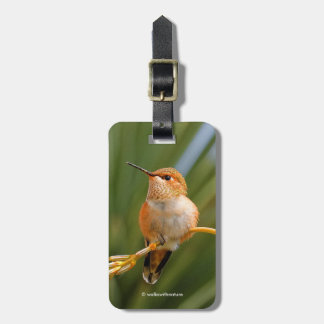Rufous Hummingbird at Rest Luggage Tag