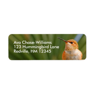 Rufous Hummingbird at Rest Return Address Label