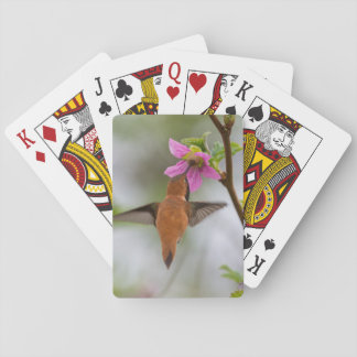 Rufous hummingbird at wild rose poker deck