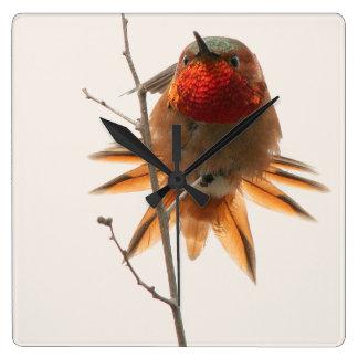 Rufous Hummingbird Bird Wildlife Animal Clock