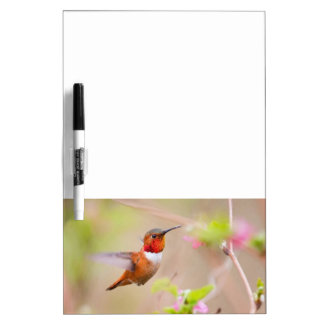 Rufous Hummingbird Dry Erase Board Message Bd