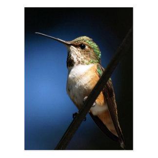 Rufous Hummingbird - Postcards