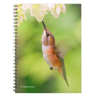 Rufous Hummingbird Sips Blueberry Blossom Nectar Spiral Note Books