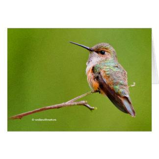Rufous Hummingbird Sitting in the California Lilac Card