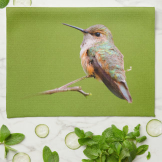 Rufous Hummingbird Sitting in the California Lilac Kitchen Towel