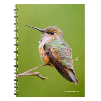 Rufous Hummingbird Sitting in the California Lilac Notebooks