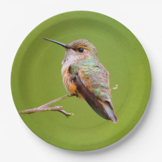 Rufous Hummingbird Sitting in the California Lilac Paper Plate
