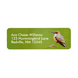Rufous Hummingbird Sitting in the California Lilac Return Address Label