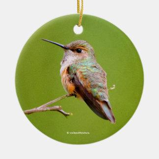 Rufous Hummingbird Sitting in the California Lilac Round Ceramic Ornament