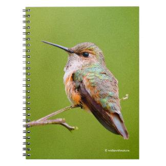Rufous Hummingbird Sitting in the California Lilac Spiral Note Books