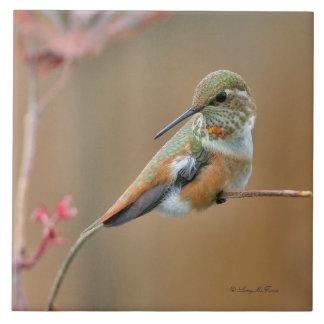 Rufous Hummingbird Tiles