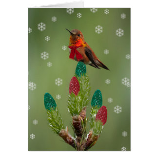 Rufous ready for Christmas Card