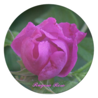 Rugosa Rose Plate