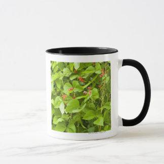 Runner beans in flower mug