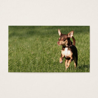 Running chihuahua business or profile card