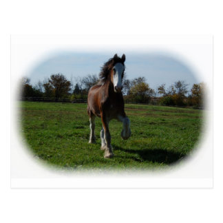 Running Clydesdale Postcard