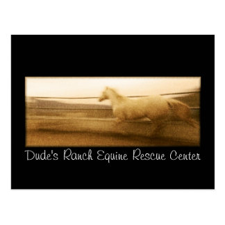 Running horse post card