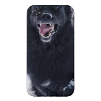 Running Newfoundland Dog iPhone Case Case For iPhone 4
