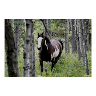 Running Pinto Paint & Forest Horse Photo Poster