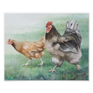 Running Rooster & Hen Photo Print