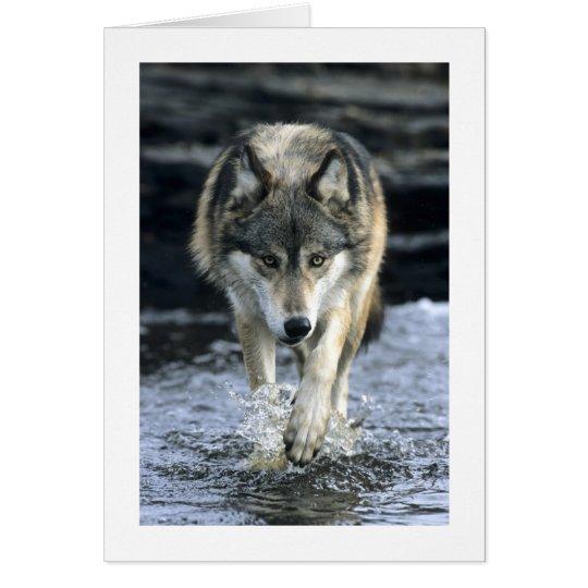 Running Wolf Card
