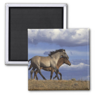 Running Yearlings Square Magnet