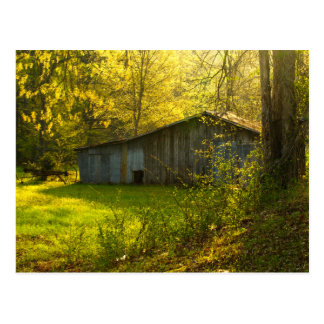 Rural Tennessee Spring Morning Light Postcard