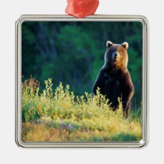 Russia, Kamchatka, grizzly of Kroska Metal Ornament