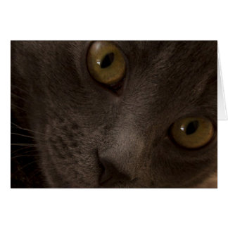 Russian Blue Cat Blank Note Card Focus for a Cause