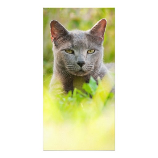 Russian Blue cat Custom Photo Card