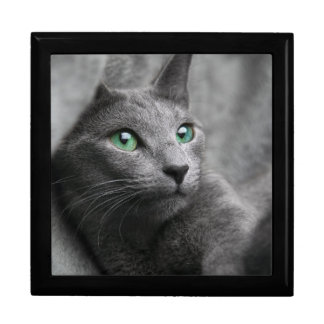 Russian-blue-cat-with green eyes gift box