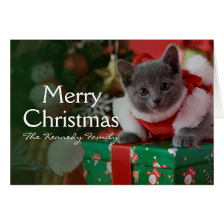 Russian Blue Kitten and Christmas Card