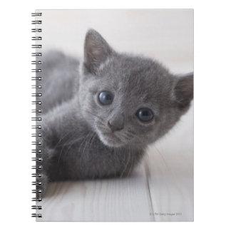 Russian Blue Kitten Notebook